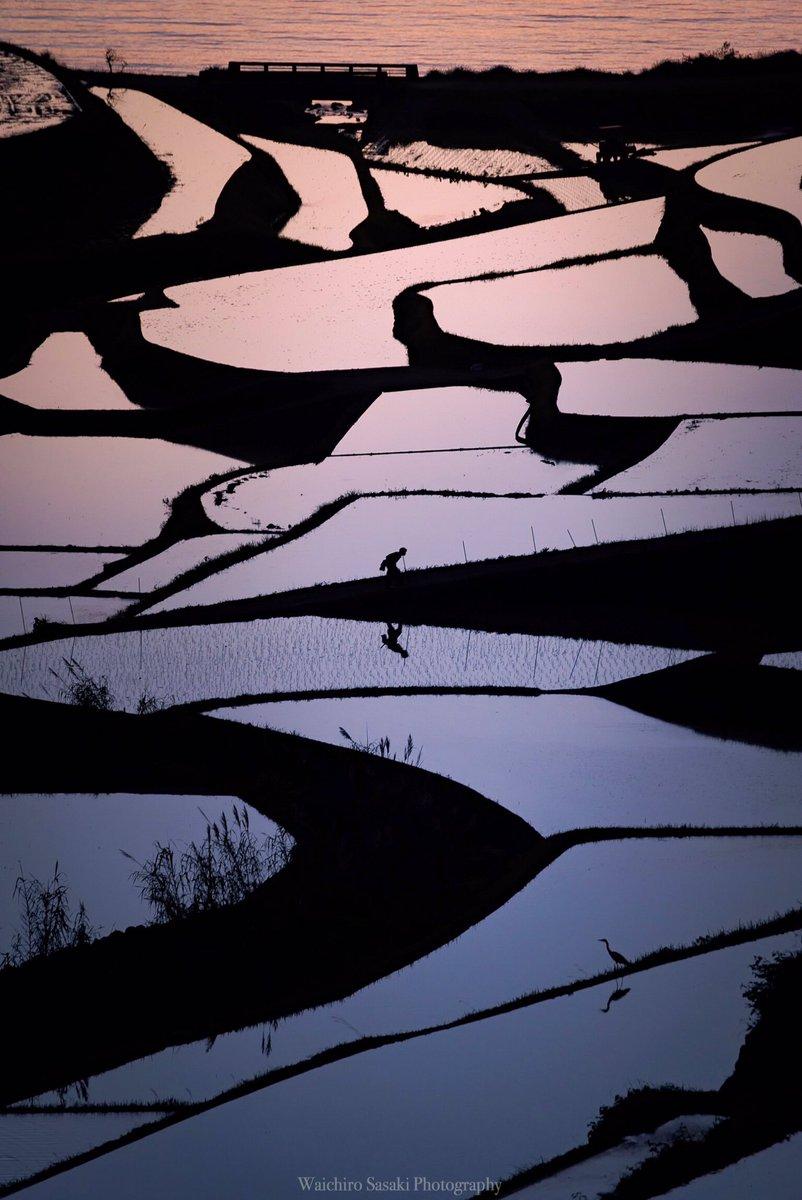 #2017自分が選ぶ今年上半期の4枚 3月から生活環境が激変しカメラを握る頻度が激減しましたが、二度とないであろう奇跡のような瞬間に数回立ち会えました✨お気に入りの縦写真です😚1『夕暮れ時の老人と鷺』佐賀2『河内藤園』福岡3『滝と光芒』熊本4『こと座流星群』佐賀 pic.twitter.com/AJEGplCNf5