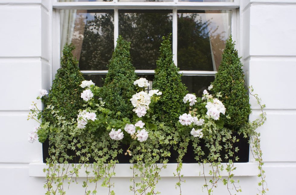 Brighten up your home with these easy and colourful #window box ideas:  https:// goo.gl/GSrzjL  &nbsp;   #Gardening #HomeImprovement<br>http://pic.twitter.com/zrhNHJPs1Y
