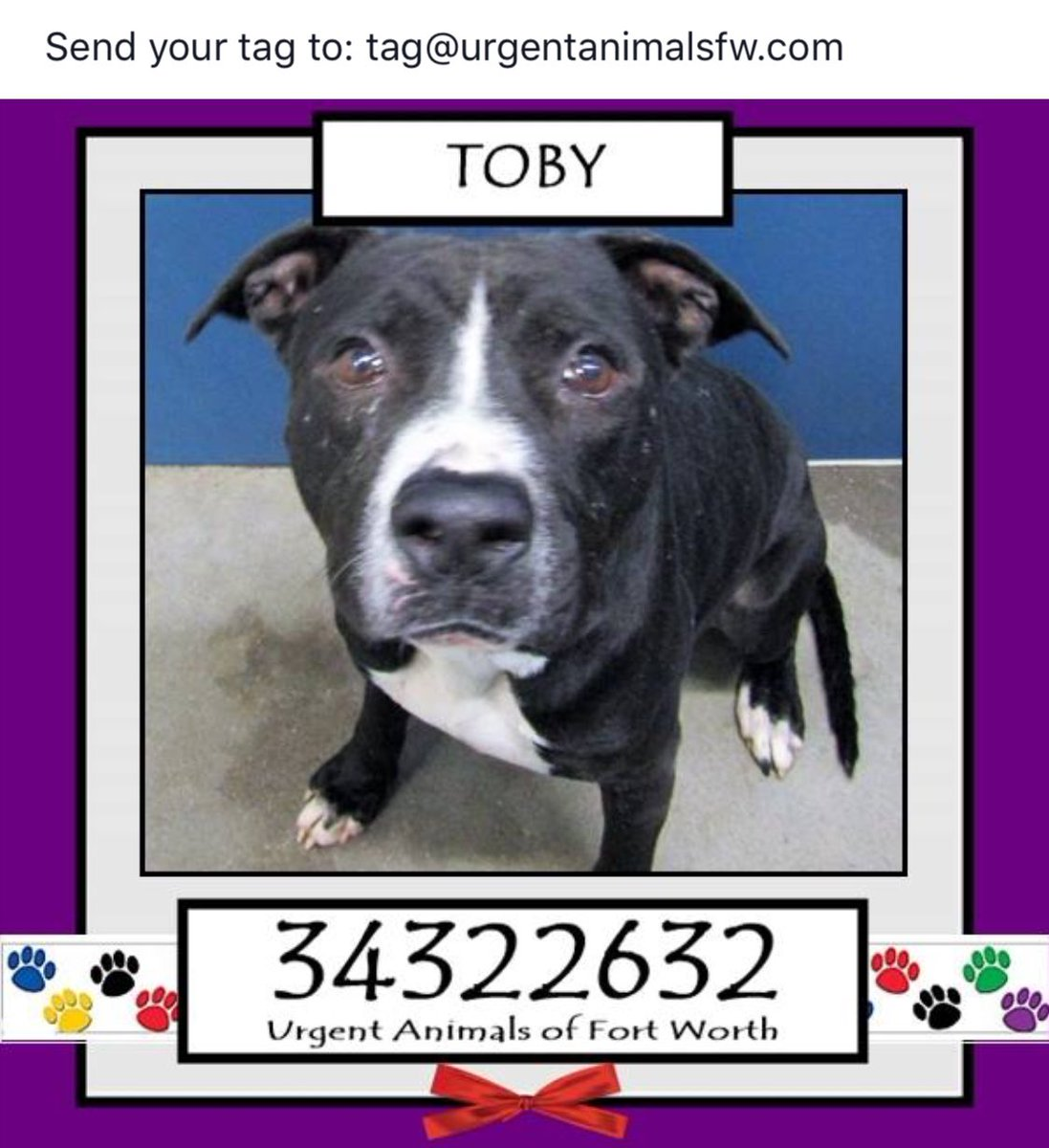 IMMEDIATE #ADOPT #FOSTER #RESCUE TAG NEEDED 2SAVE 2YR OLD TOBY #FortWorth #TX SWEET BOY NEEDS A #HERO #PLEDGE  https://www. facebook.com/fwaccurgents/p hotos/a.866615710077191.1073742653.137921312946638/1366350640103693/?type=3 &nbsp; … <br>http://pic.twitter.com/35DZ81NXBS
