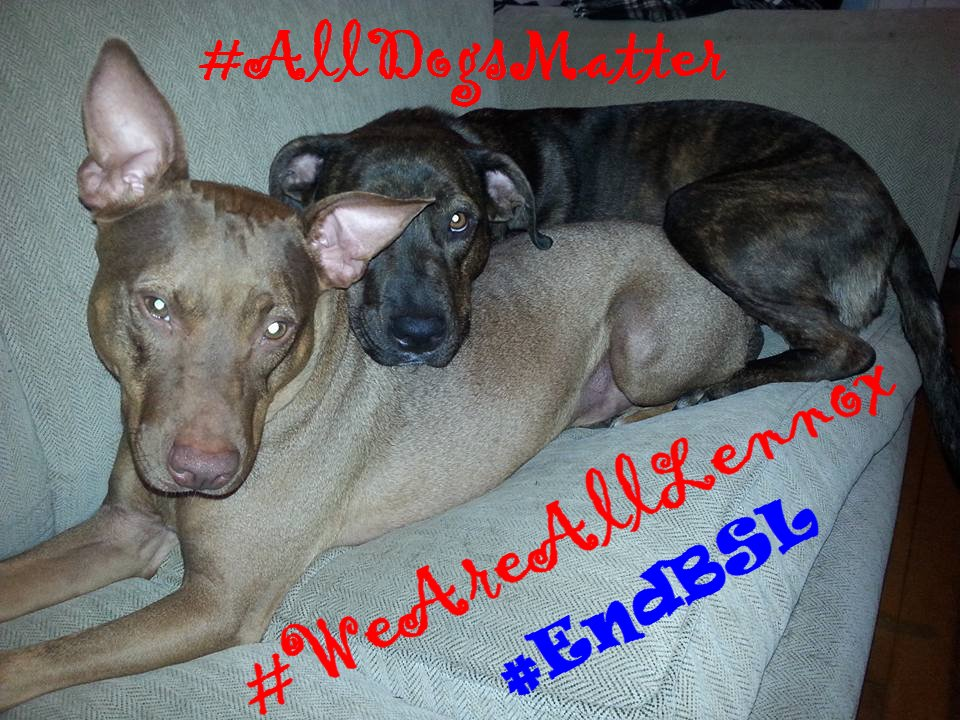As a society we should be striving to be better #EndBSL #WeAreAllLennox #WUABSL #AllDogsMatter #InherentlyGood #DontBullyMyBreed #polqc <br>http://pic.twitter.com/GHGlPRETdt