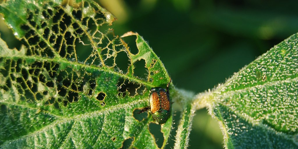 Insects can wreak havoc in #soybeans if left unchecked. Scout for the following:  http:// bit.ly/2smajnq  &nbsp;   #Agronomy #scout17<br>http://pic.twitter.com/2xpEZNiFZY