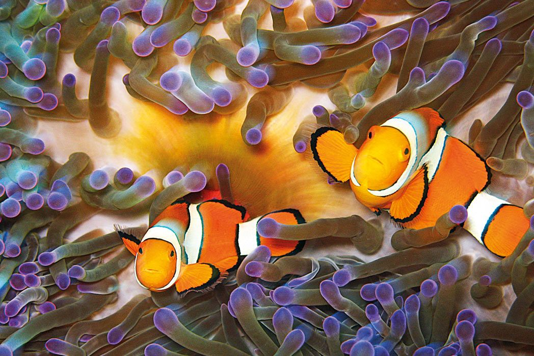 BLOG:  8 fishy facts you didn't know about Nemo https://t.co/etNxgyjjlb  #thisisqueensland