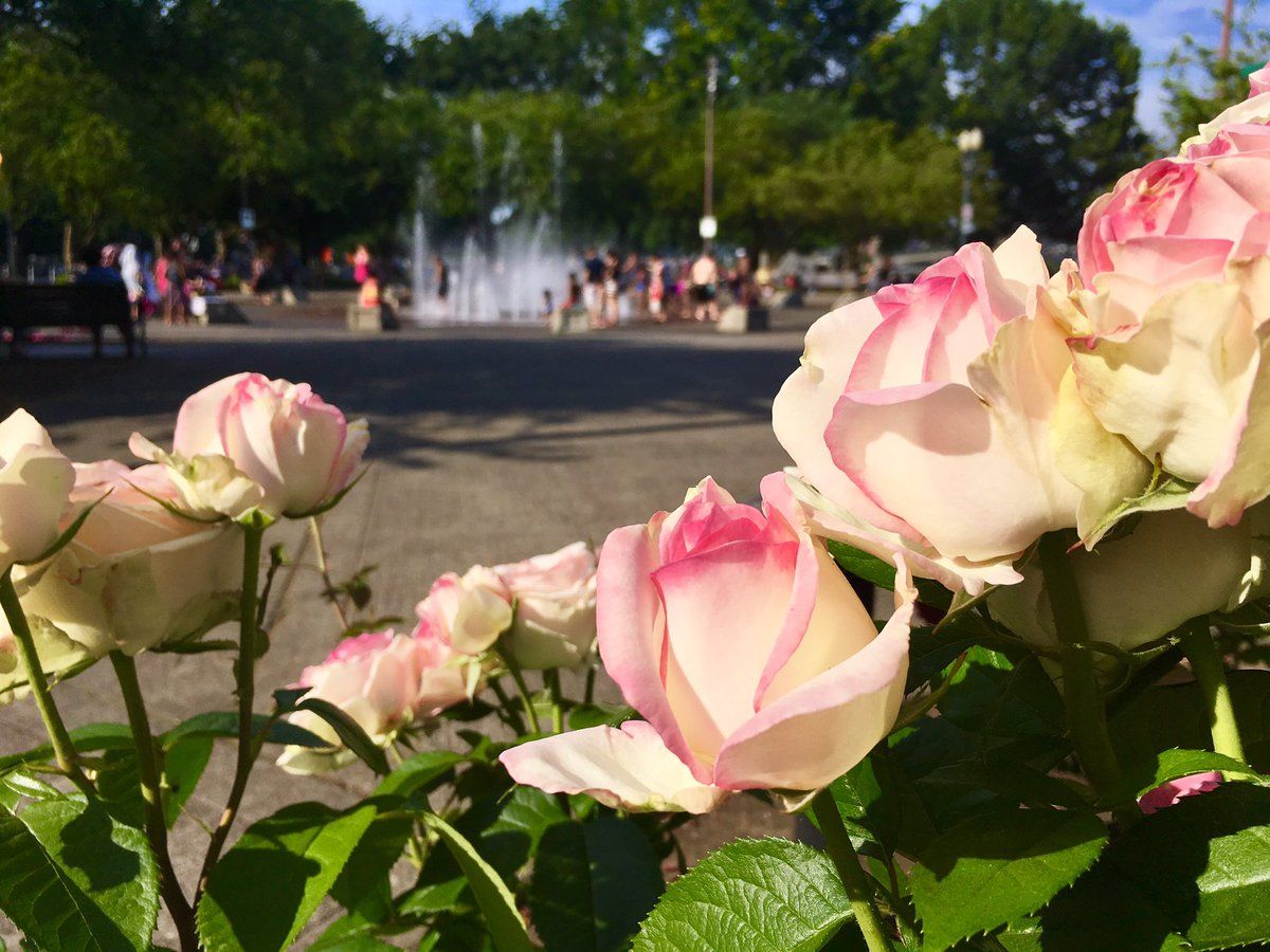 It&#39;s a toasty day in the Rose City. Quite a few folks playing in the fountains in downtown #PDX #ORWx<br>http://pic.twitter.com/NAKYm8C1Lr