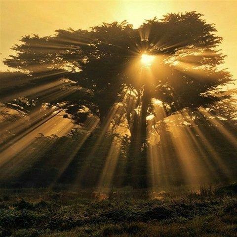 It&#39;s with words as with sunbeams. The more they&#39;re condensed, the deeper they burn. Southey #writing #film #acting #amwriting #screenwriting<br>http://pic.twitter.com/92sPfMluAY