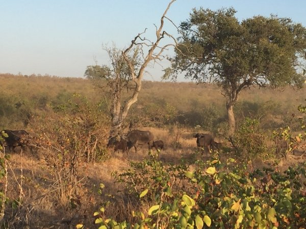 And #eventful #MondayMorning in #krugerPark this morning with #lion #hyena and #elephant sightings  #outdoorfun  @adstube @afrivenues<br>http://pic.twitter.com/wXsQj1t0Lh