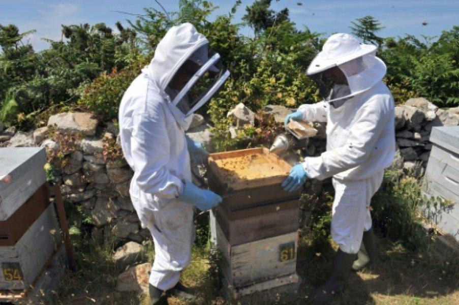 DOCUMENT RMC - Le gouvernement envisage de réautoriser pesticides tueurs d'abeilles et épandage aérien https://t.co/O2SrOEVGqI (via @mdups)