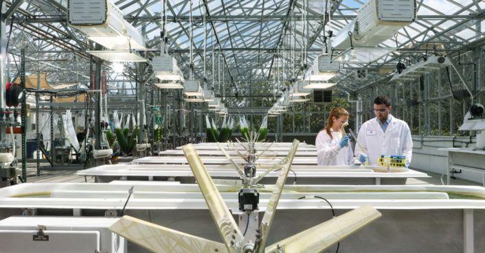 Breakthrough #algae strain produces twice as much #biofuel  http:// bit.ly/2s7BCDK  &nbsp;   #ExxonMobil #SynGenomeInc<br>http://pic.twitter.com/txiHHpVZ4k