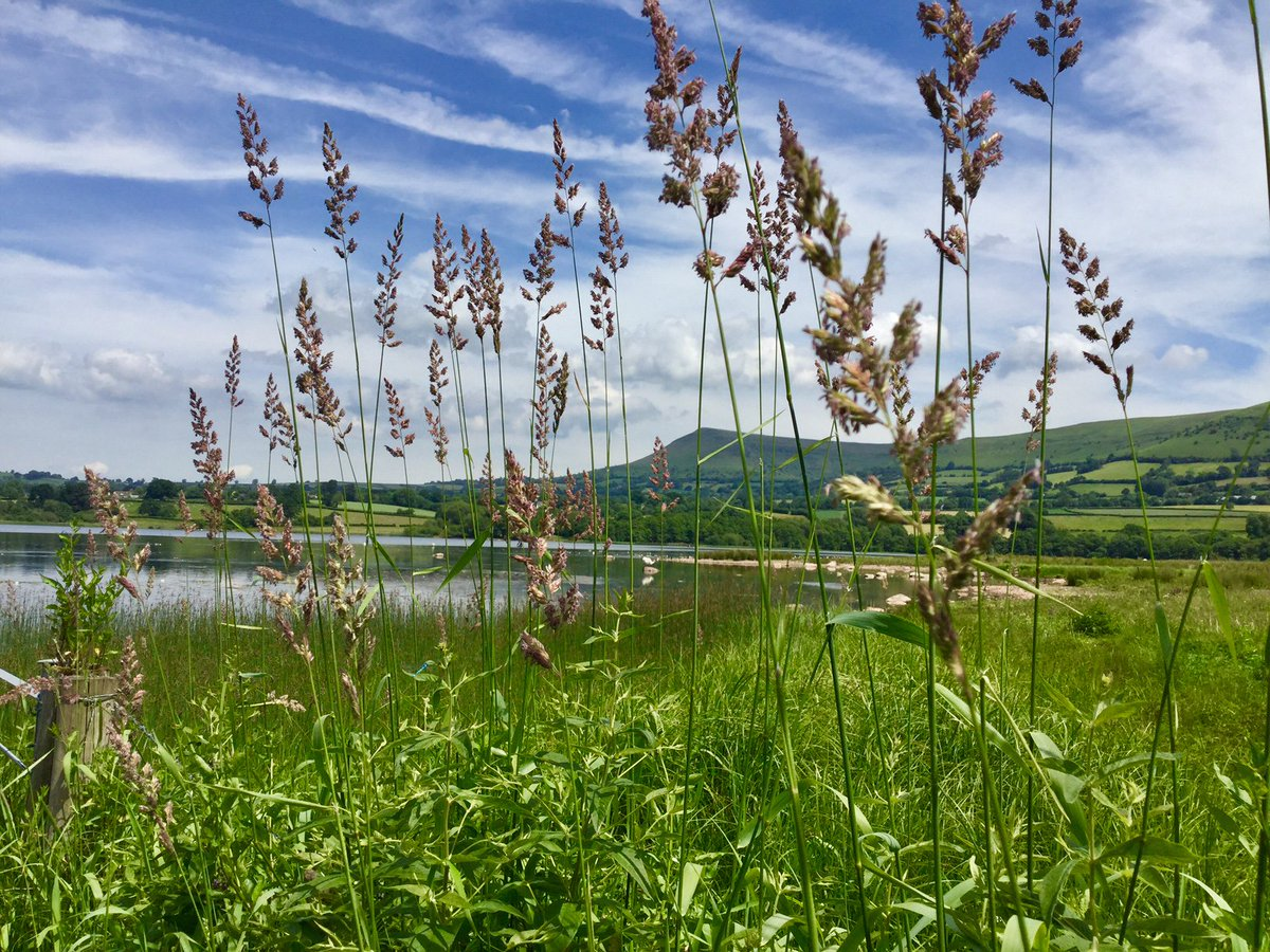 Our #picoftheday features Llangorse Lake in Powys, taken by Tony Lewis <br>http://pic.twitter.com/Udh10qLHuI