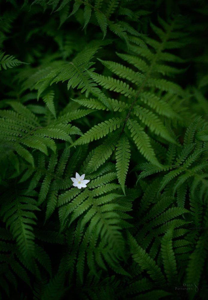 Смотреть картинки цветок папоротник