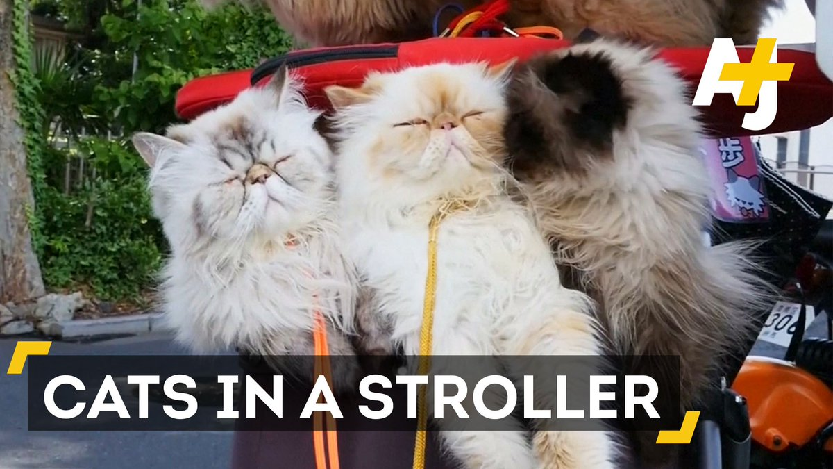 This man walks around Tokyo with 10 cats in a stroller.