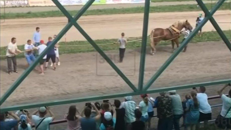 видео лошади перетягивающей канат термобелье
