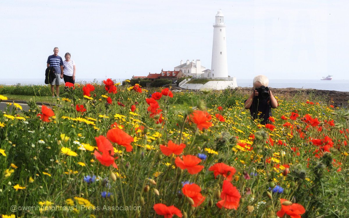 Beautiful #wildflowers at st Mary&#39;s @lightphotosnet #northeasthour #whitleyBay @StormHour #weather @SnapYourWorld<br>http://pic.twitter.com/B34tYwnCZv