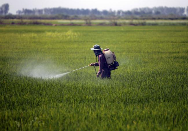 """DERNIÈRE MINUTE - """"Pesticides tueurs d'abeilles"""" : c'est finalement non pour le gouvernement >> https://t.co/dry23Zuv91"""
