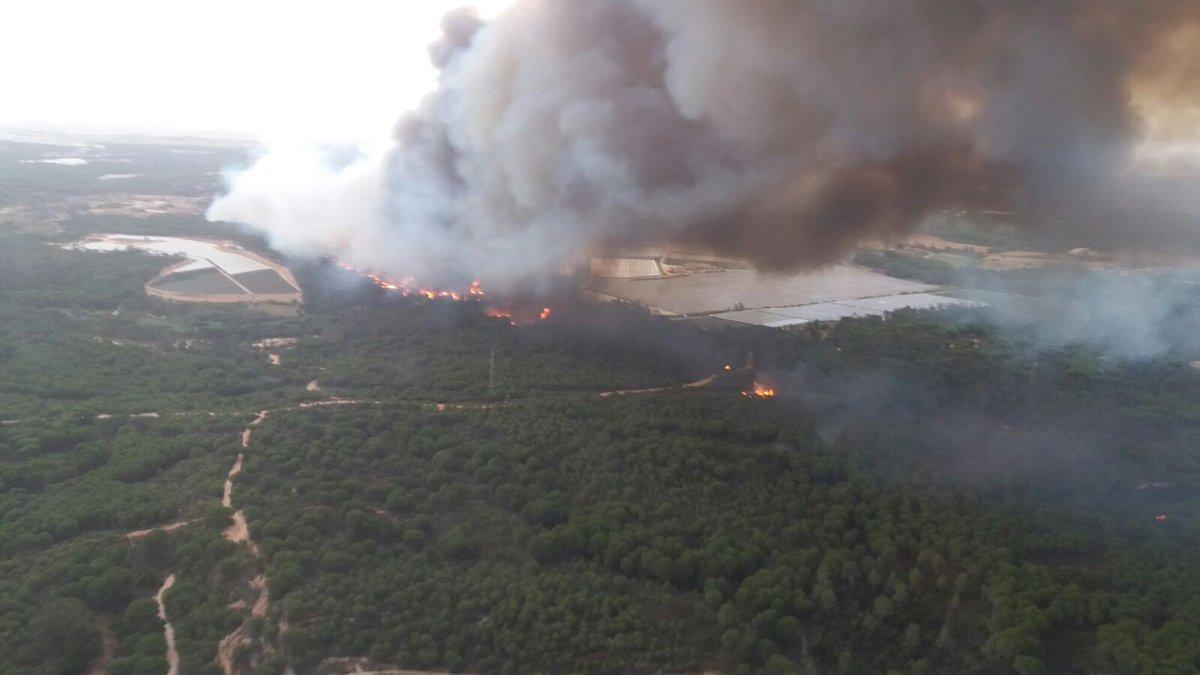 Comunicado sobre #DoñanaArde: un desastre anunciado https://t.co/AScvL...