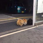 コンビニに可愛い猫のヤンキーが現れた店内に入ってこないんかいっ