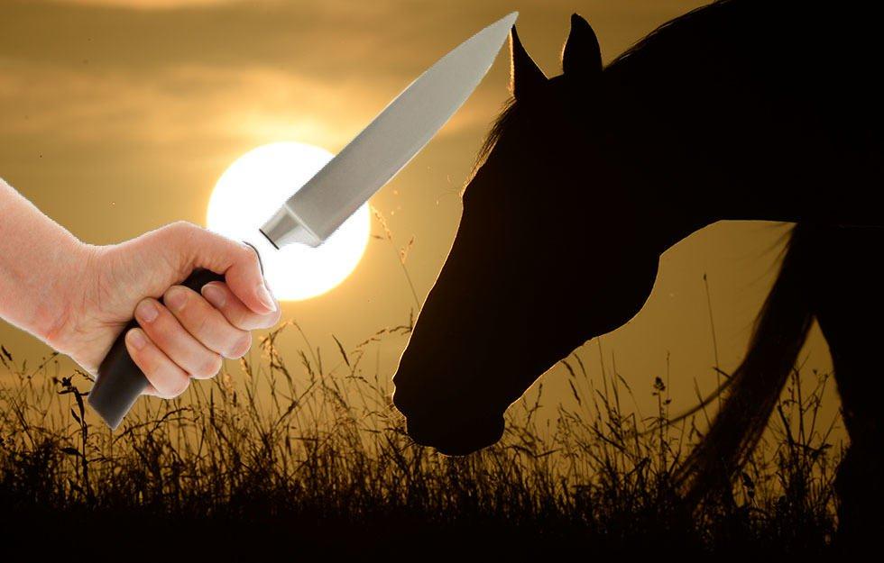 Tag24 News Jena On Twitter Sex Attacke Auf Pferde Httpstco