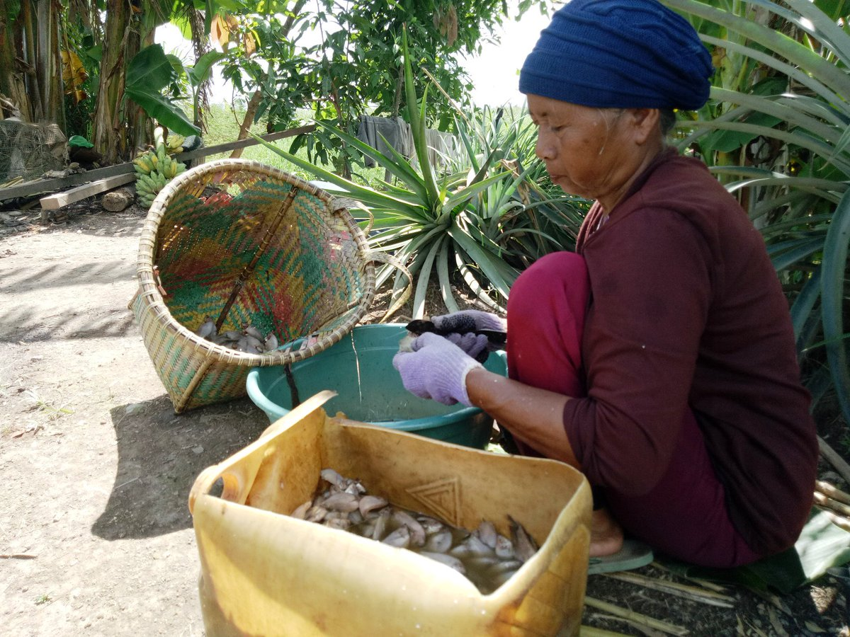 May #Photo by Pinky Nurul/South Unit Staff. Cleaning #fish and furry creatures. #Community #Borneo #Biodiversity