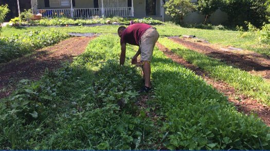 How cool is this?! @GWTFLLC turns lawns into cropland. Even @EmoryGoizueta is taking notice -  http:// on.11alive.com/2u7uMKU  &nbsp;   #AtlantaAlive <br>http://pic.twitter.com/8ySbgLkLRK