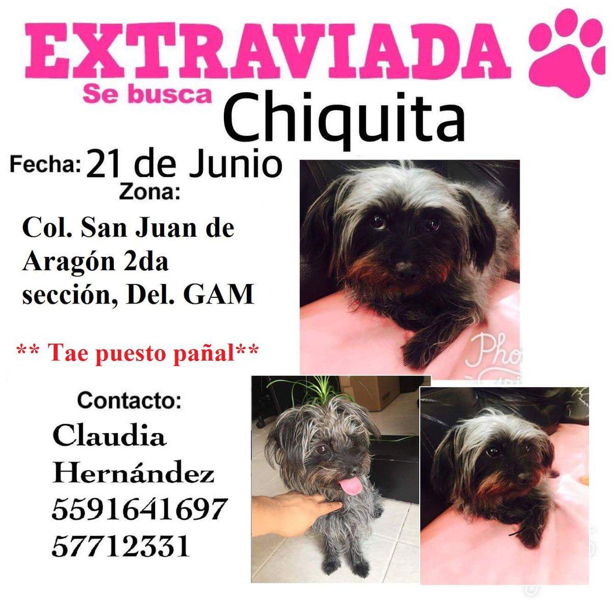 #SEBUSCA #CHIQUITA #HEMBRA #SANJUAN DEARAGON #SEGUNDASECC #GAM @GAM_xTi @Lindavista_GAM @sebuscaCdMx @PetBookMexico @perruna_ac @911Canino <br>http://pic.twitter.com/zfPDtDdeBF