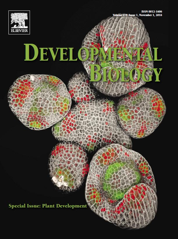 Have you read our DB special issue on Plant Development yet? #plantbio17 https://t.co/YTnaZhuLuG https://t.co/Z5u0KNtiXb
