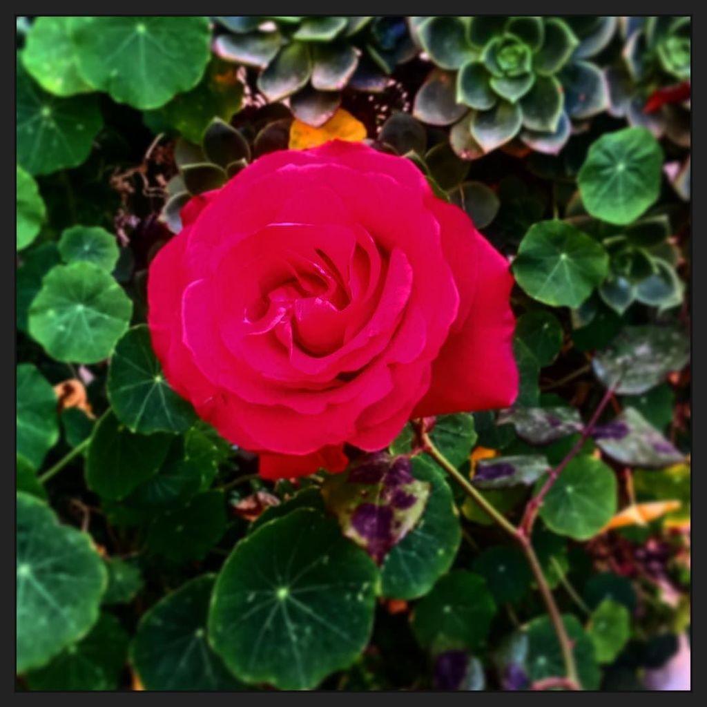 Try to see it my way #Vida #Color #Alegría #lackofsincerity #letdown  http:// ift.tt/2tMV85y  &nbsp;  <br>http://pic.twitter.com/M2LPziYaYs