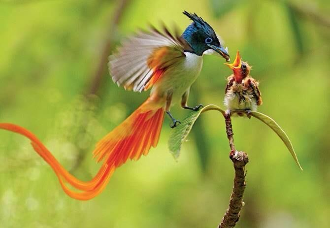 Asian Birds Pictures 28
