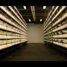 Industrial warehouses turning to indoor farms? https://t.co/jdtbDDCBN7