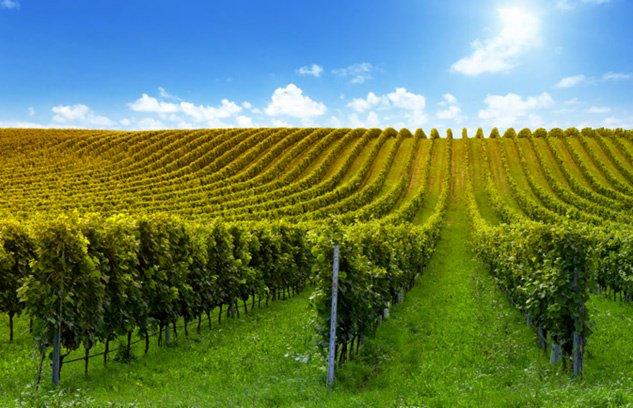 Conoce nuestra línea de productos especializada para el manejo vitivinícola y agrícola #CentralCintac #tutorfrutal http://hubs.ly/H07Vc7X0