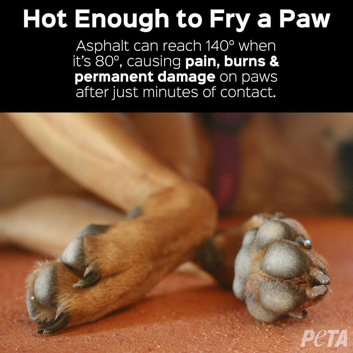 #WhenItsTooHot think of your dog's paws 🐾