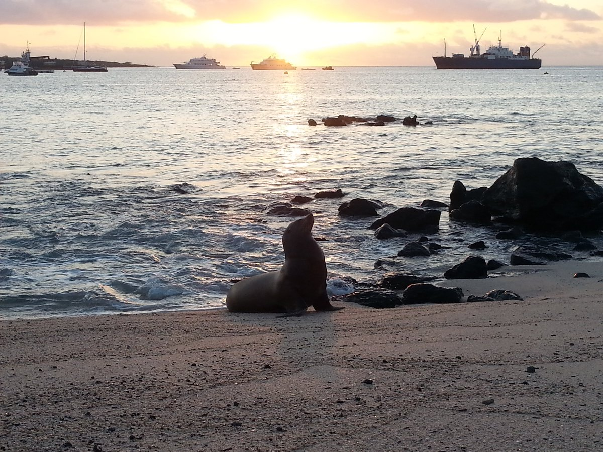 Galapagos Islands #Ecuador : is a cruise or island hopping best? Here&#39;s how to choose: #allyouneedisecuador #travel  http:// ow.ly/ydrO30cU8nJ  &nbsp;  <br>http://pic.twitter.com/bnAdf3tKYX