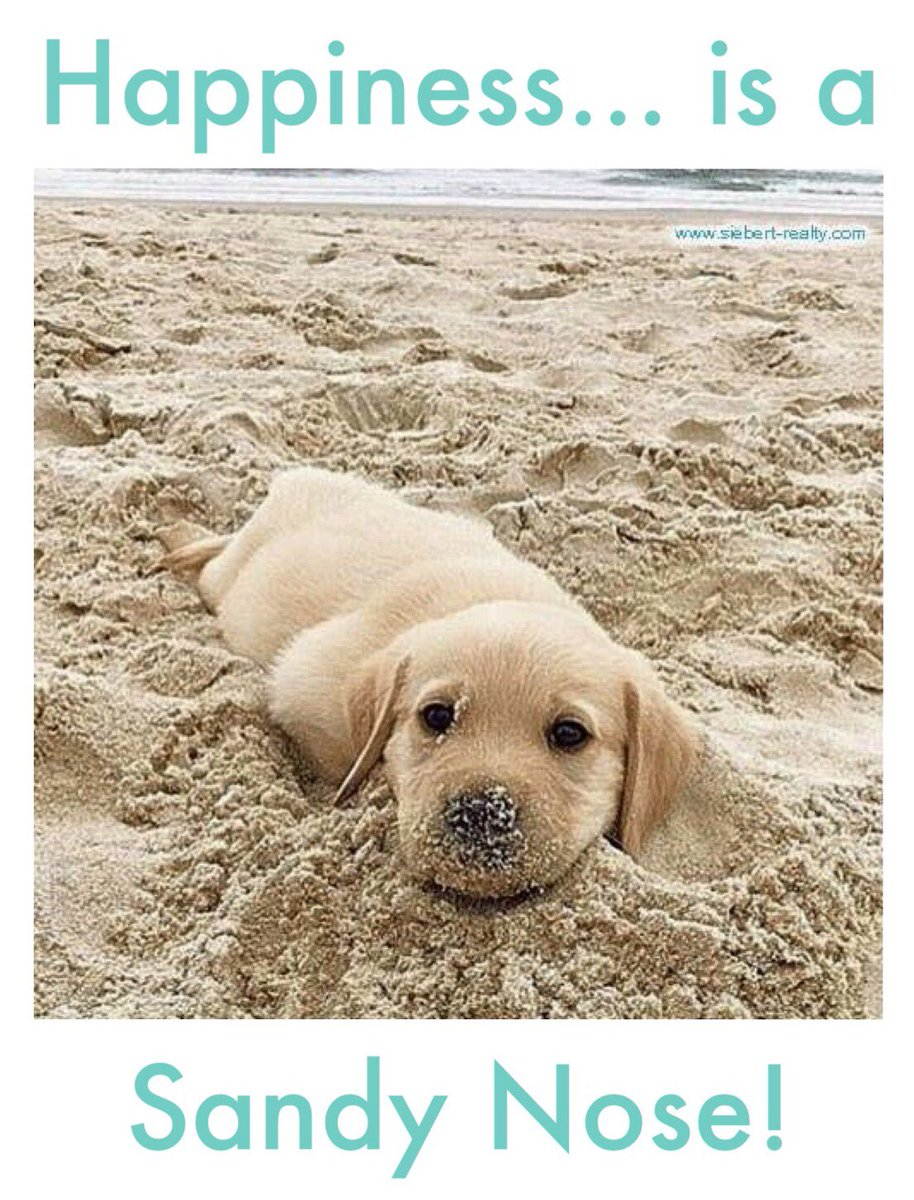 #Happiness is a #sandy nose!  🐶🐶🐶 https://t.co/4tEVNfRpeh #dogs #sandb...