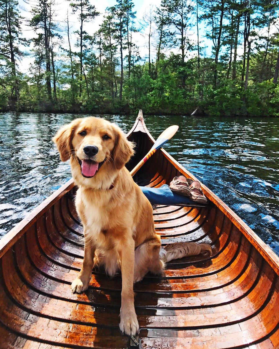 "▽ Kiel James Patrick on Twitter: ""Same shot, same spot, 1 year apart! RT  and follow my dog https://t.co/NOo3Z1H568 to watch him grow… """