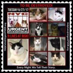 Please contact the HELP DESK for any and all inquiries about helping tonight's/tomorrow's 9 #URGENT #NYC #CATS  http:// nyccats.urgentpodr.org/urgent-cats-he lp-desk/ &nbsp; … <br>http://pic.twitter.com/agxz5BRghG