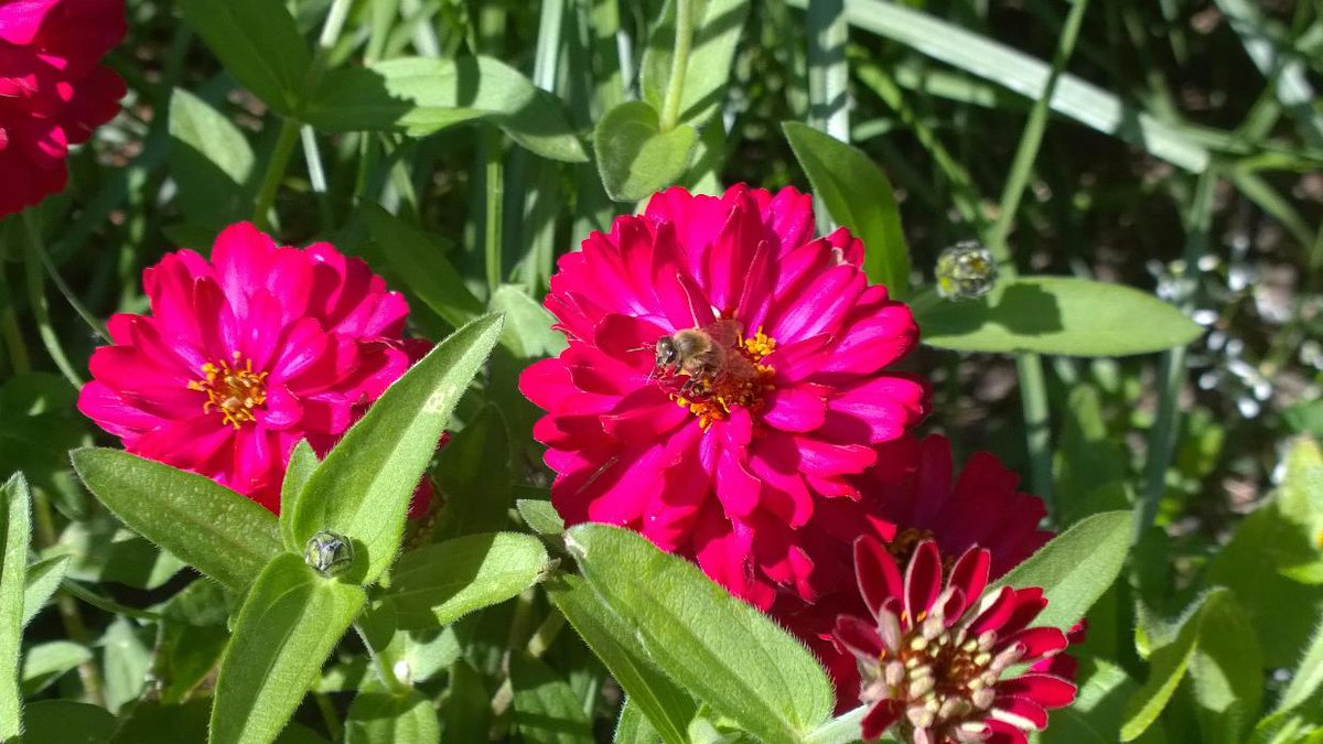 To see this #pictures in #future we all together should #protect our #climate. #flower #flowers #bee #bees #garden<br>http://pic.twitter.com/ugaqsFoD56