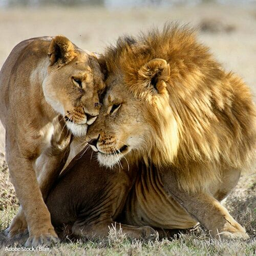 S/S Speak Up to Stop Canned #Lion Hunts in South Africa! - The Rainforest Site  http:// therainforestsite.greatergood.com/clickToGive/tr s/petition/canned-hunting/?utm_term=TRSFAN-PP-TA-canned-hunting-OpCPC-W30-KWenvironment-exclude&amp;origin=TRS_TRSFAN_SOCIAL_FBPC_PETITION_TA_CANNED-HUNTING &nbsp; …  #BanTrophyHunting #BanCubPetting <br>http://pic.twitter.com/gCIOzXwY1w