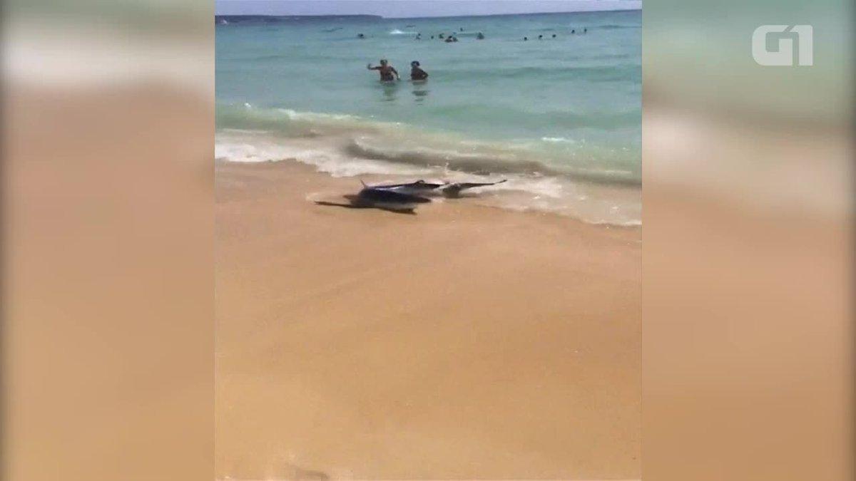 Flagrante de tubarão em ilha espanhola assusta turistas https://t.co/kaSsVn2MIA #G1