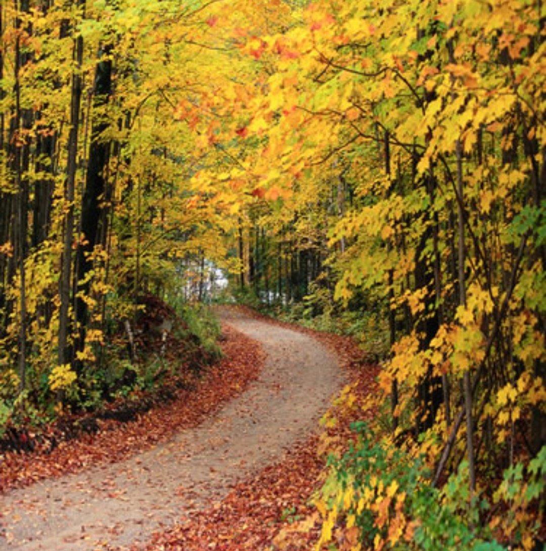 قالت لي أحب الخريف، ومن يومها وانا أتساقط #اعجبتني صباحكم سعادة #صباح_...