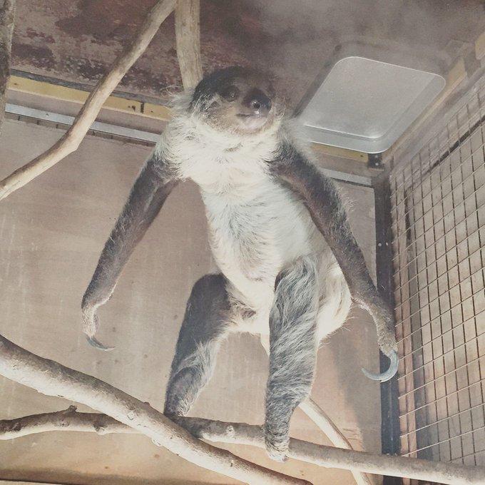 このまえ何気なく撮ったナマケモノの写真をひっくり返したら、ふしぎな気持ちになったのでみなさんにもお知らせしておきます。