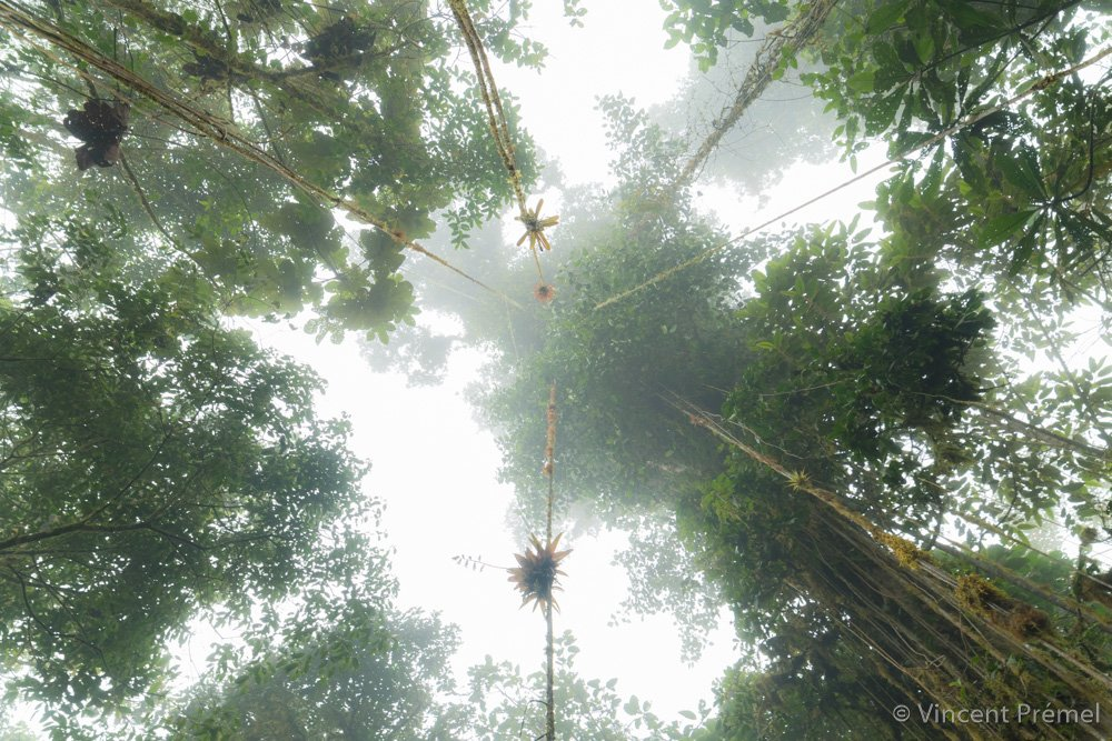 Probably one of the better place in the world #Cloudforest #Ecuador  http:// vincentpremel.com  &nbsp;  <br>http://pic.twitter.com/2h90LTXL6D