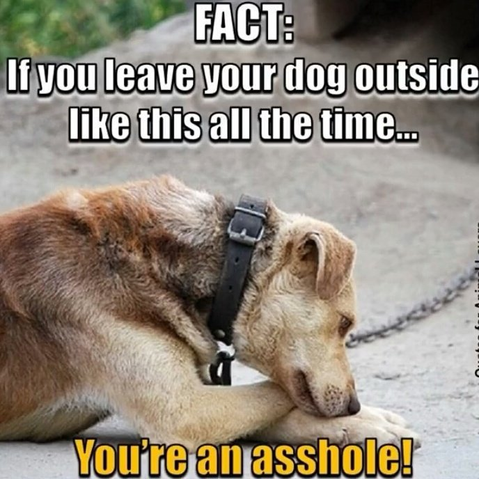 We were hoping that @CaptainObvious could verify this fact #AdoptDontS...