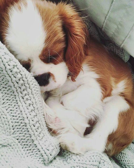 Let me sleep! &lt;3 #dogs #puppy #golden_retriever #puppies #dog #travel #adventure #journey #USA #fun #cute #America #pets<br>http://pic.twitter.com/KqBhRfKmdL