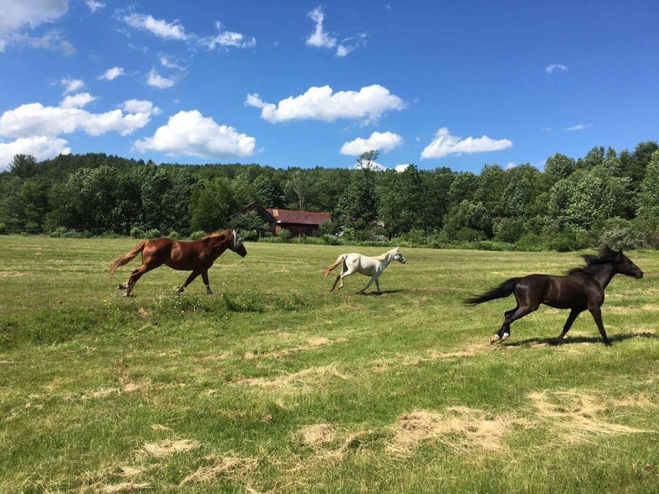 Gerda&#39;s Equine Rescue is located in the beautiful W. Townshend #Vermont. The rescues love the freedom of the property. COME VISIT! <br>http://pic.twitter.com/34tCzopCo5