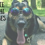 Look cool. Wear sunglasses. #nationalsunglassday #mydogiscoolerthanyours