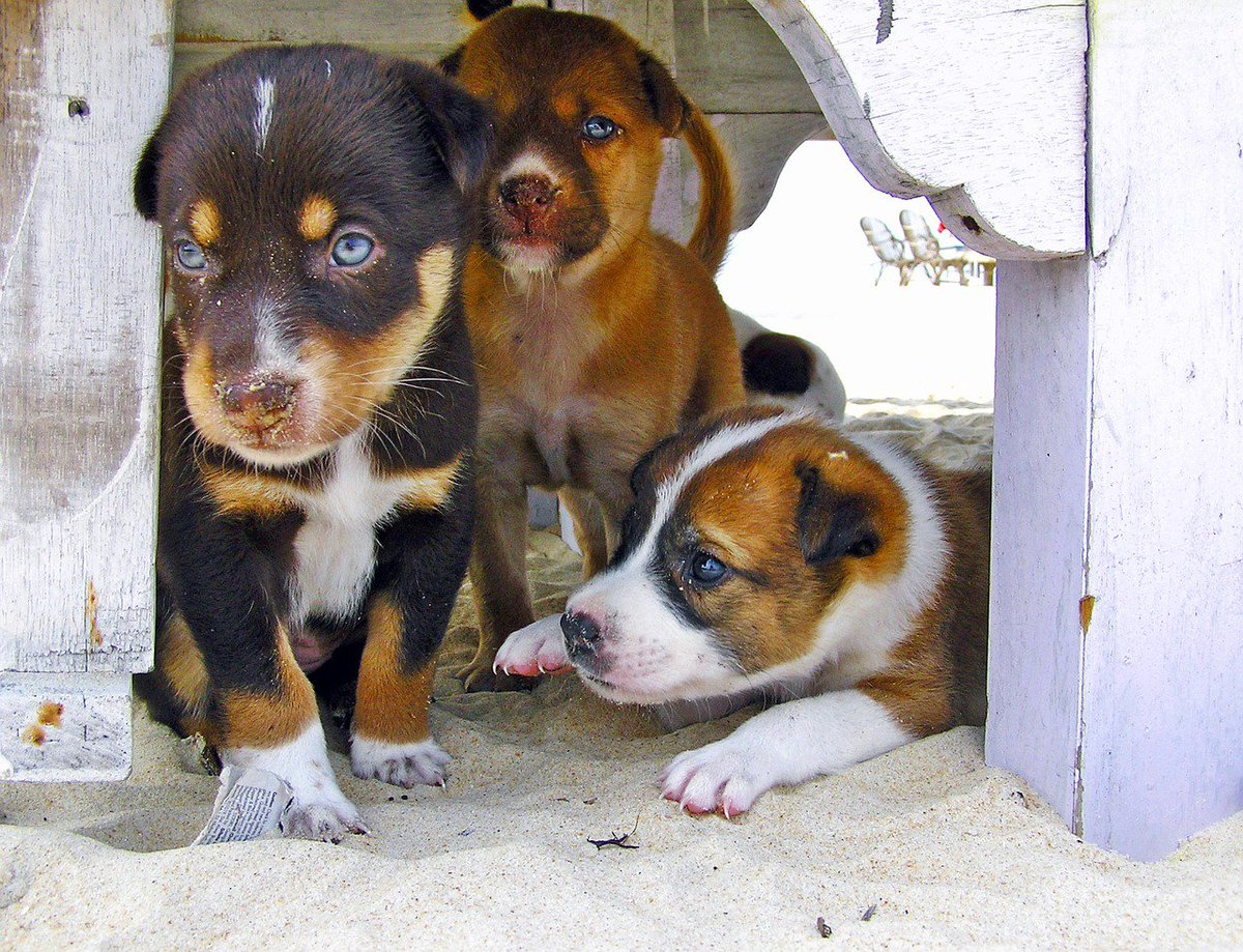 If you like puppy pictures this will make your day! #puppy #friends <br>http://pic.twitter.com/JrcPq3NPz2
