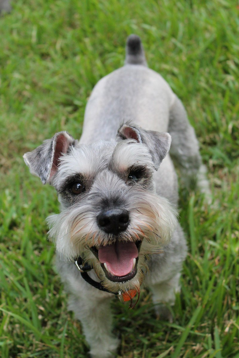 Let me cheer you up with this wonderful #smile! #dog #friends <br>http://pic.twitter.com/ZizSawoWIY