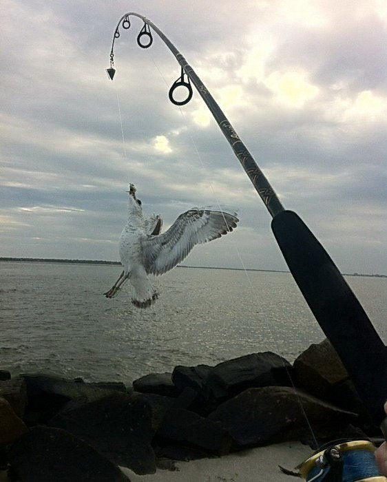 рыбалка без границ центральный форум рыбаков егорьевск