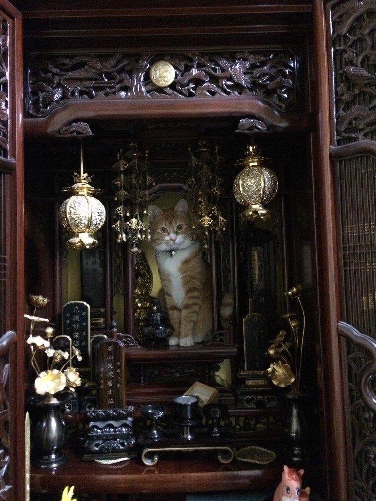 家に帰って仏壇を見たら大変なことになっていた