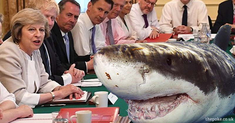 Great white shark spotted off Britain's south coast offered top cabinet position  https://t.co/673aC9v07f