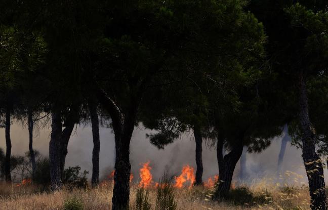#Rediff VIDEO. Incendie dans un parc naturel en Espagne: Au moins 1.500 personnes évacuées https://t.co/Ue8Q5cmvwF