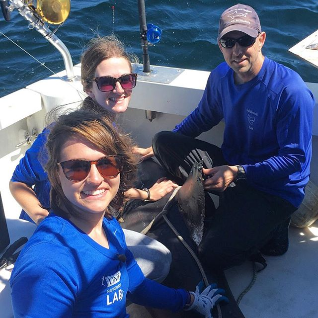 Dr. Sulikowski &amp; his students caught &amp; tagged this huge female porbeagle shark yesterday! #UNE #lifeatUNE #marinescience #research #sharks<br>http://pic.twitter.com/q6ZLRVv1eT